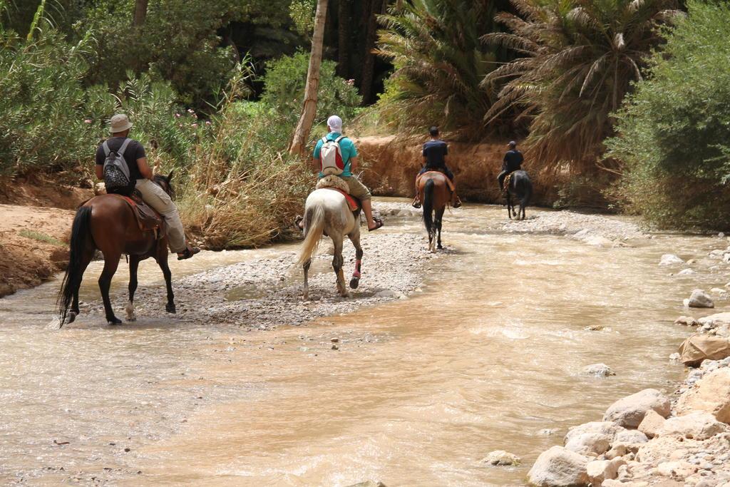 Agadir balade à dos du cheval à partir de 20 euro