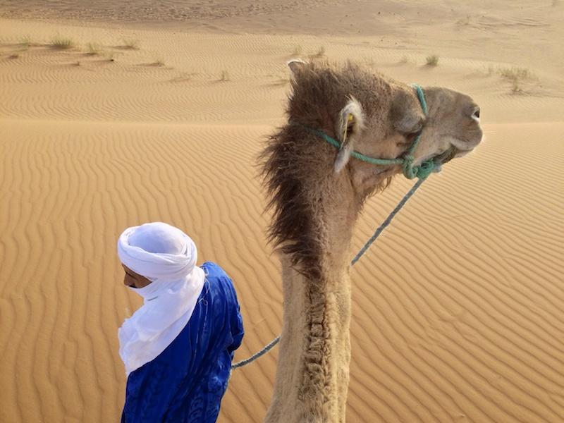 Camel-nice-1631895862