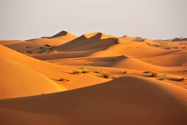 barchans-dunes-the-wahiba-sands-of-the-arabian-desert-at-dawn-picture-id833182462-1631894760